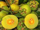 GARCINIA CAMBOGIA kapsle extrakt 100 kapslí hubnutí,štíhlá linie,dieta,energie,vysoký,extrakt,cholesterol,extrakt,kapsle